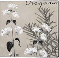 Flowering Herbs II Fine-Art Print