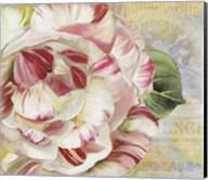 Camellias II Fine-Art Print