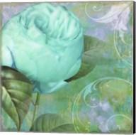 Aqua Rose I Fine-Art Print