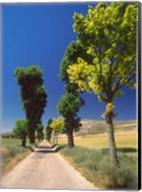 Pilgrimage Road, El Camino de Santiago de Compostela, Castile, Spain Fine-Art Print