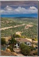 Olive Groves, Ubeda, Spain Fine-Art Print