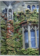 Halls of Ivy, Oxford University, England Fine-Art Print