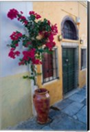 Bougenvillia Vine in Pot, Oia, Santorini, Greece Fine-Art Print