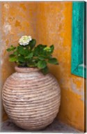 Flower in pot, Crete, Greece Fine-Art Print