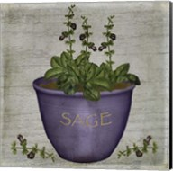 Herb Sage Fine-Art Print