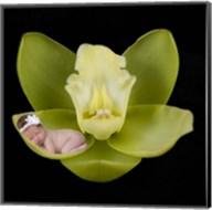 Orchid Baby Fine-Art Print