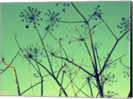 Cow Parsley I Fine-Art Print