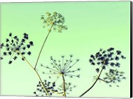 Cow Parsley II Fine-Art Print