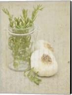 Herb Still Life II Fine-Art Print