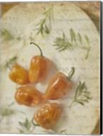 Herb Still Life VI Fine-Art Print