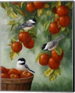 Apple Harvest Chickadees Fine-Art Print
