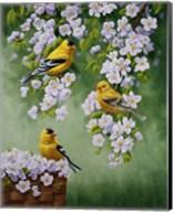 Goldfinch Blossoms Fine-Art Print