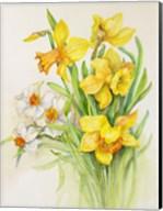 Daffodils- Springs Calling Card Fine-Art Print