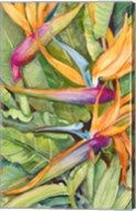 Birds Of Paradise Fine-Art Print