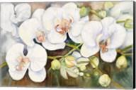 Stem Of Orchids Fine-Art Print