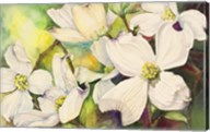 White Dogwood Fine-Art Print