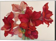 Holiday Amaryllis Fine-Art Print