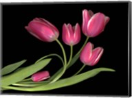 Tulips 3 Fine-Art Print