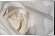 White Rose Closeup Fine-Art Print