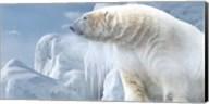 Arctic Frost Bear Fine-Art Print