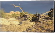 Canyonland 13 Fine-Art Print