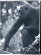 Gorilla 2 Fine-Art Print