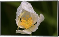 North Shore White Flower With Dew Fine-Art Print