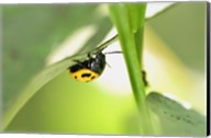 Yellow And Black Ladybug Fine-Art Print