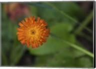 North Shore Orange Flower Fine-Art Print