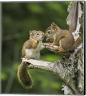 Squirrel Nose Rubbing Fine-Art Print