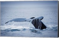 Whale Tail And Sea Fine-Art Print