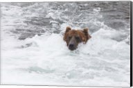Bear Wading Fine-Art Print