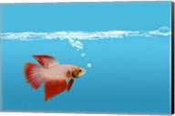 Goldfish Gone Swimming II Fine-Art Print