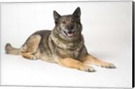 Dog Portrait In Gold Chain Fine-Art Print