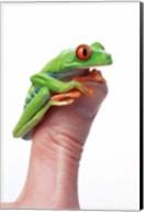 Green Frog On Thumb Fine-Art Print
