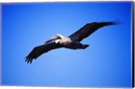 Pelican Flying Blue Sky Fine-Art Print