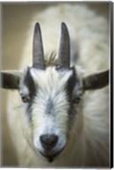 Two Horns Closeup Fine-Art Print