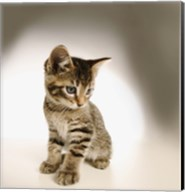 Cute Kitty Fine-Art Print