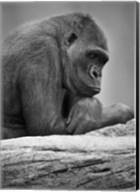 Gorilla Profile II Fine-Art Print