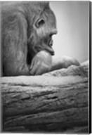Gorilla Profile I Fine-Art Print