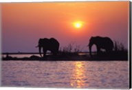 Elephants at Sunset Fine-Art Print