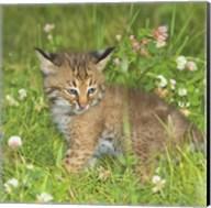 Wild Cat Cub Fine-Art Print