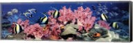 Under the Sea Fine-Art Print