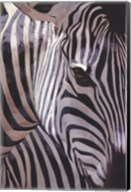 Zebra Stripes Fine-Art Print