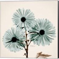 Chrysanthemum Sky Fine-Art Print