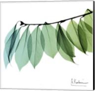 Camelia Leaf Fine-Art Print