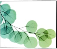 Eucalyptus Green Fine-Art Print
