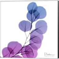 Eucalyptus In Purple Fine-Art Print