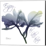 Midnight Orchid 2 Fine-Art Print