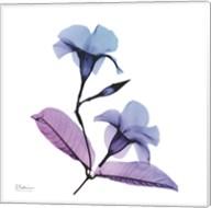 Mandelilla Purple 2 Fine-Art Print